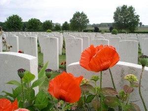 grave poppies